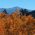 golden aspen below Pikes Peak by Christine Ford