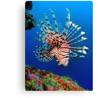 Lionfish at Apo Reef Canvas Print