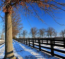 Winter in Central Kentucky by Michael L. Colwell