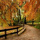 Autumn in the park  by annalisa bianchetti
