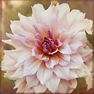 Pretty in Pink by Lynn Starner