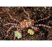 Boxer Crab Photographic Print