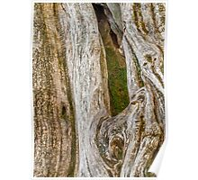 The bark of old trees Poster