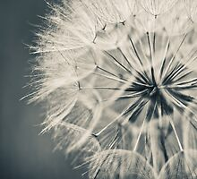 ...soft as butterfly kisses by Jen Wahl