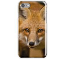 Red Fox iPhone Case/Skin