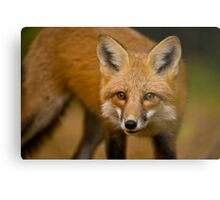 Red Fox Metal Print