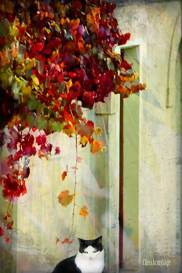 Autumn dreaming by Chris Armytage™