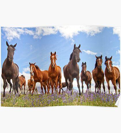 Molesworth Horses Poster