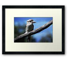 Kookaburra sitting in an old gum tree . . .  Framed Print