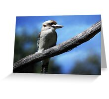 Kookaburra sitting in an old gum tree . . .  Greeting Card