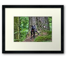 Did You See A Squirrel? Framed Print