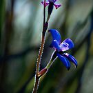 """Enamel Orchid"" by Heather Thorning"