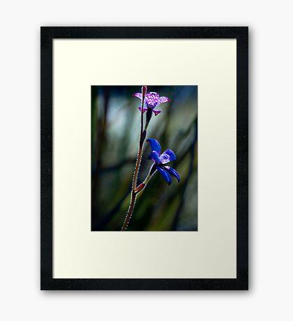 """Enamel Orchid"" Framed Print"