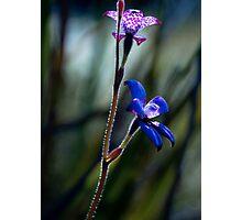 """Enamel Orchid"" Photographic Print"