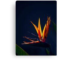 Golden Glow - Bird of Paradise Canvas Print