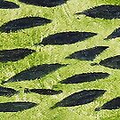 Impression Water Reed Minnows by Thomas Murphy
