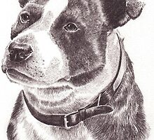 Staffordshire Bull Terrier in Pencil by Lee Dickinson