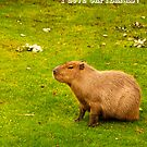 I love capybaras! by Vac1