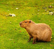 I love capybaras! by Vac1