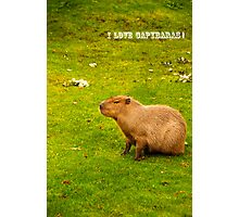 I love capybaras! Photographic Print