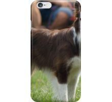 Random Border Collie
