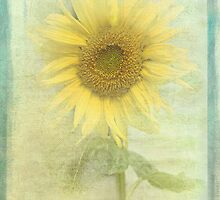 Sunny by Catherine Hamilton-Veal  ©