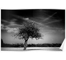 Lonely Tree - Phoenix Park, Dublin Poster