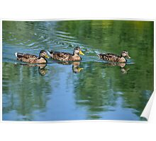 Happy Day on the Pond  Poster