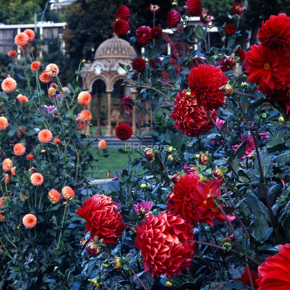 City Park—Launceston, Tasmania by Brett Rogers