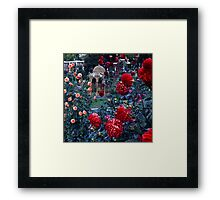 City Park—Launceston, Tasmania Framed Print