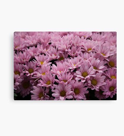 Pink Flowers Canvas Print