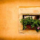 Alsace, France by Jacinthe Brault