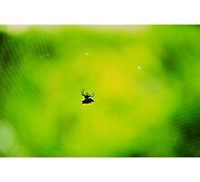 Gasteracantha cancriformis Photographic Print