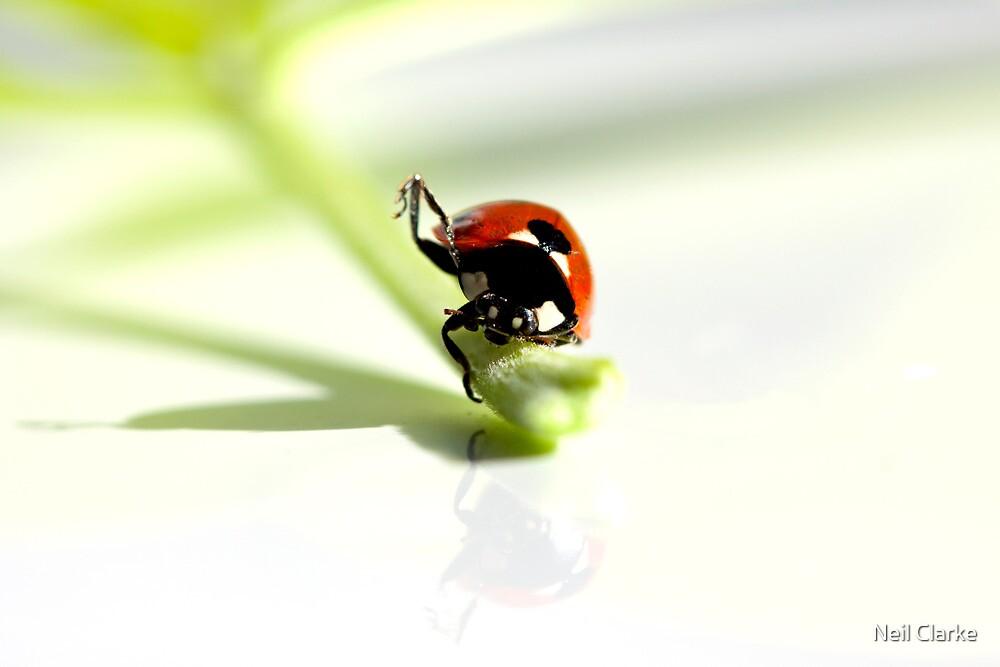 Ladybird Yoga. by Neil Clarke
