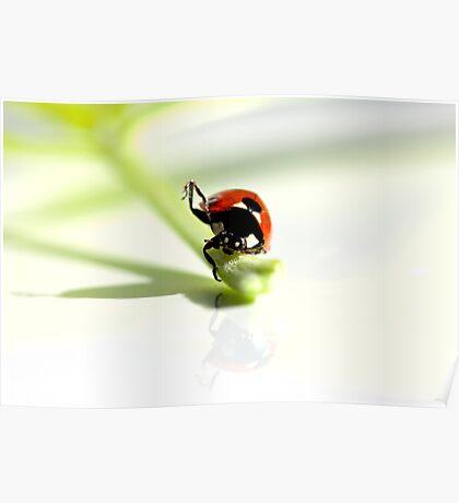 Ladybird Yoga. Poster