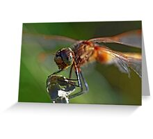 White-Faced Meadowhawk Greeting Card