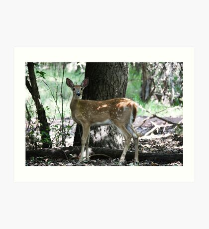 Young Whitetail Art Print