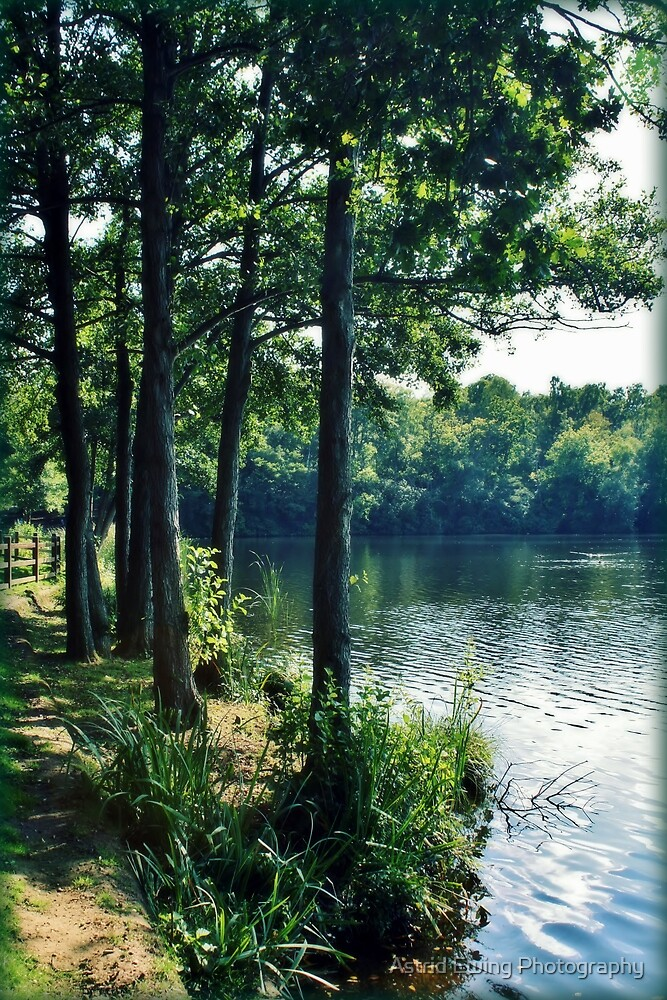 Lakeside Shade by Astrid Ewing Photography