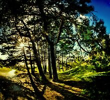 Where the Fairies live by Photonook