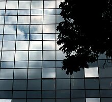 Nature On Glass by BalancedArt