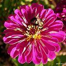 Bumble Bee Feeding by Mechelep