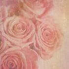 Mystic Roses  by Nicola  Pearson