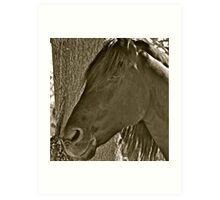 Gorgeous Andalusian horse Art Print