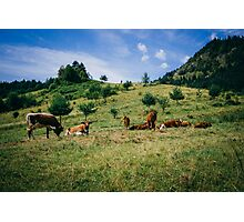 Bells and Cows Photographic Print