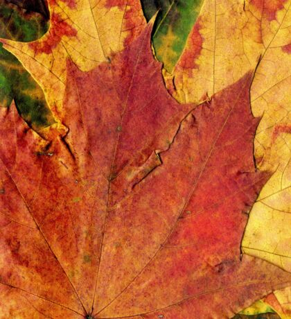 Detailed Fall Maple Leaf Texture 2 Sticker