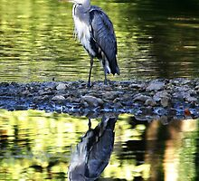 Why Herons Look In The Water All Day by Hovis