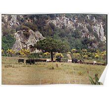 ITALY - TUSCANY MAREMMA PARK UCCELLINA.-PARCO DELL'UCCELLINA MAREMMA TOSCANA -ITALIA-  EUROPA-VETRINA RB EXPLORE 30 GIUGNO 2013 Poster
