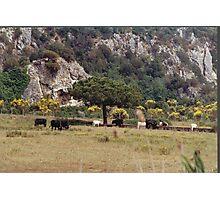 ITALY - TUSCANY MAREMMA PARK UCCELLINA.-PARCO DELL'UCCELLINA MAREMMA TOSCANA -ITALIA-  EUROPA-VETRINA RB EXPLORE 30 GIUGNO 2013 Photographic Print