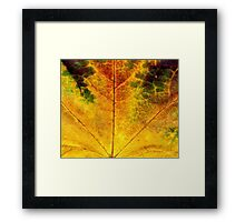 Detailed Fall Maple Leaf Texture 3 Framed Print