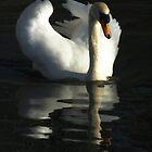 Swan Lake I by TheWalkerTouch